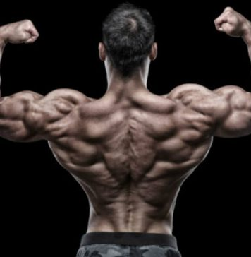 Back Workout Bodybuilding